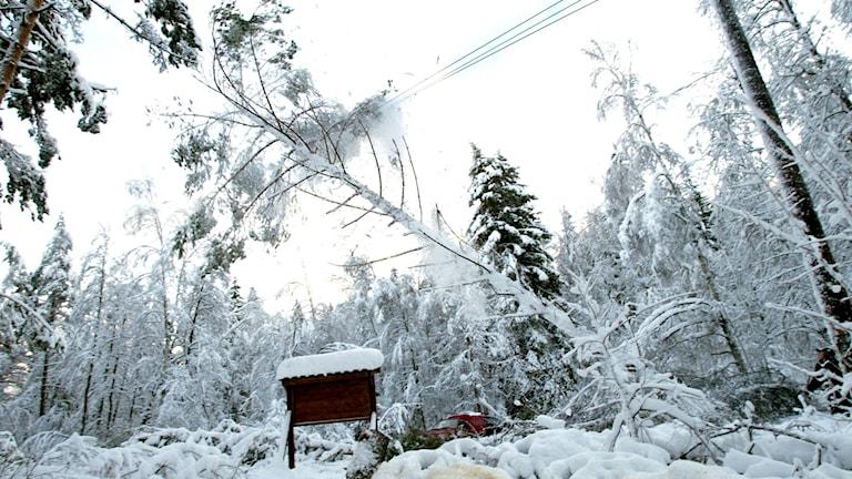 Träd över elledning efter snöstorm.
