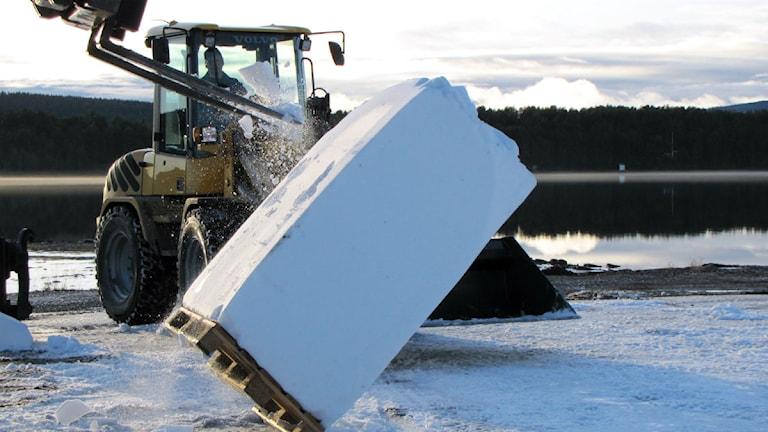 Snö som sparats från förra säsongen plattas till innan det används i bygget. Foto: Alexander Linder/ Sveriges Radio.