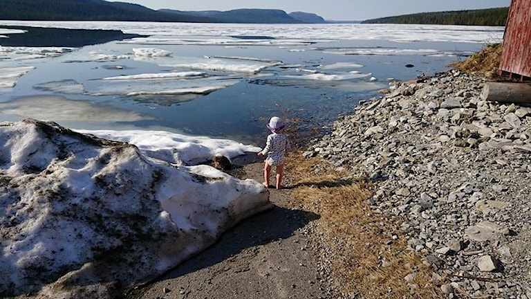 Sommarvärme och isblock i Laisvallby