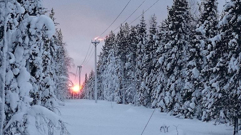 Vintersol som kryper upp över trädtopparna i en ledningsgata.