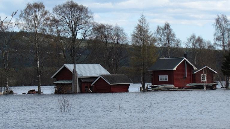 Högt vatten i Torne älv 22/5 2012. Foto: David Zimmer/Sveriges Radio.