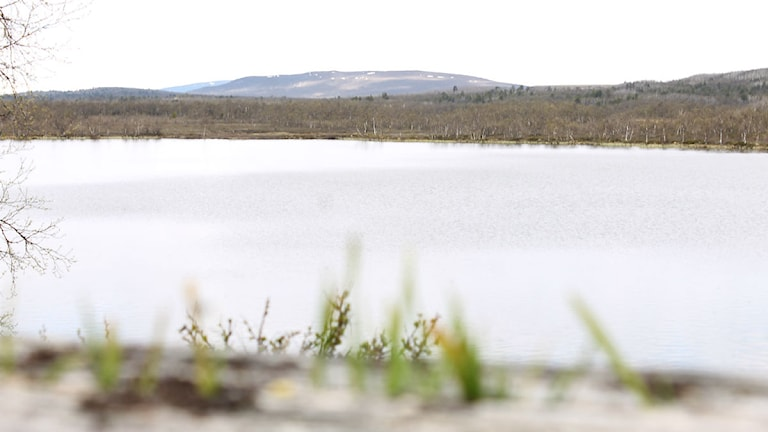 Sjön Rakkurijärvi. Foto: Alexander Linder/ Sveriges Radio.