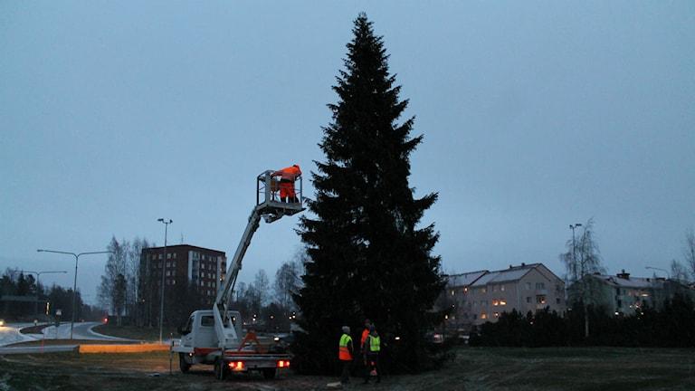 Julgran i rondellen på Örnäset.