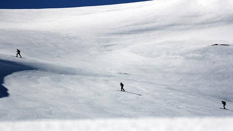 Tre skidåkare på led.