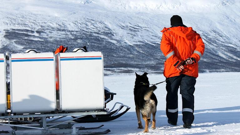 Hund och människa på tur. Inne i burarna sitter fler hundar och väntar på deras tur. Foto: Alexander Linder/ Sveriges Radio.