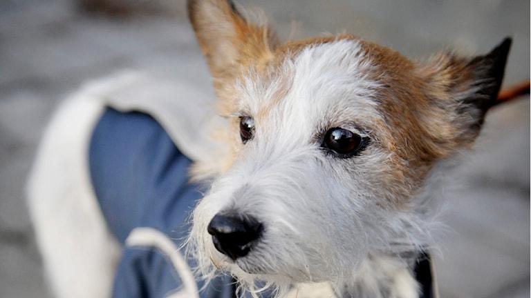 Hund. Foto: Scanpix