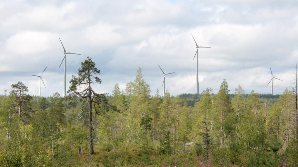 Vindkraftverk i Markbygden i Piteå kommun. Foto: Eva Elke/Sveriges Radio.