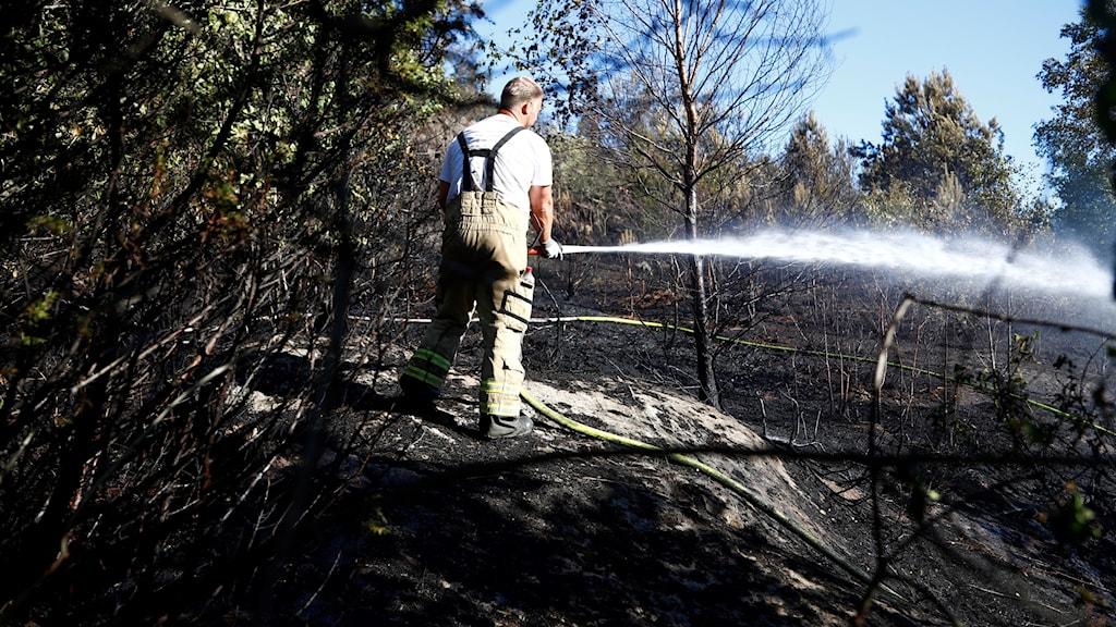 Brandman som släcker skogsbränder. Arkivbild.
