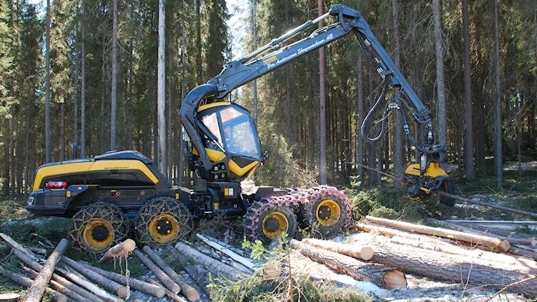 En gulsvart skogsmaskin tar ut träd på ett soligt hygge.