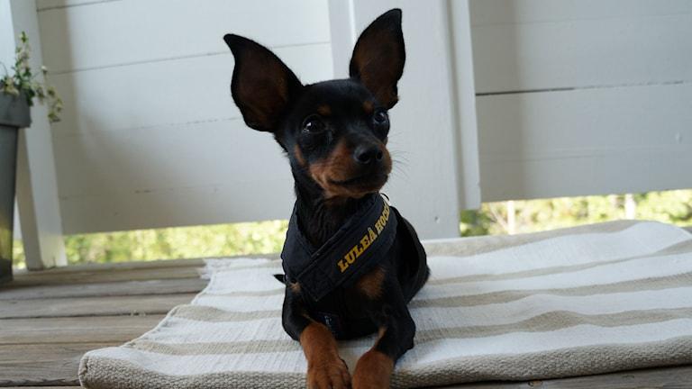Diesel är ett hundnamn som börjat dyka upp på barn. Foto: Ann-Sofi och Pär, Luleå