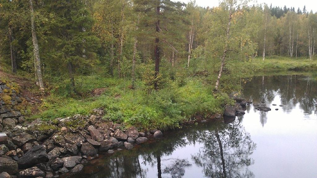 Arkivbild från Sågforsbron i Åträsk utanför Piteå. Foto: Ann-Christin Wallner-Hoppe, Sveriges Radio