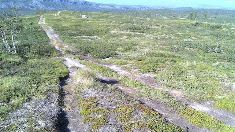 Fyrhjulingsspår på Kungsleden. Foto: Länsstyrelsen