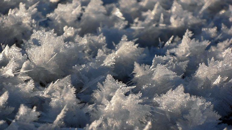 Lyssnarbild: Snöstjärnor av Maj-Britt Larsson.