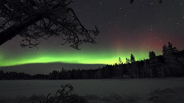 Lyssnarbild: Norrsken över vinterlandskap, fotot taget mellan Koskullskulle och Tjautjas i Gällivare kommun. Fotograf: Magnus Emlén.