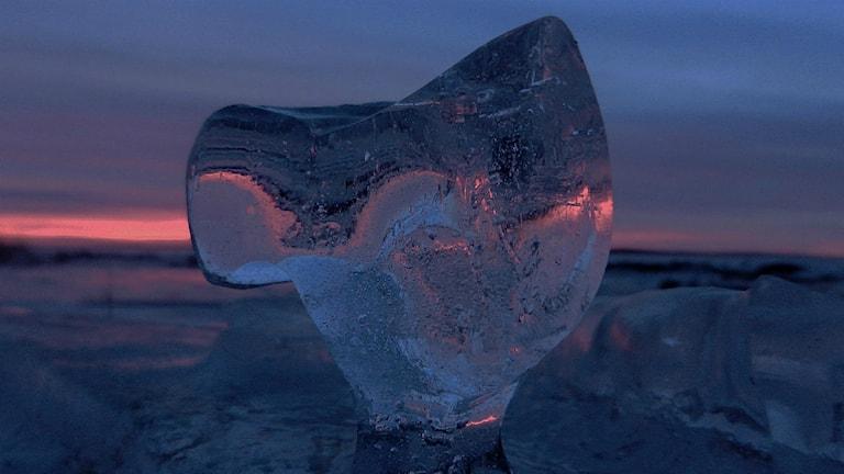 Lyssnarbild: Rosaskimrande isbit i solnedgång vid Storön i Kalix. Foto: Dagny Johansson.