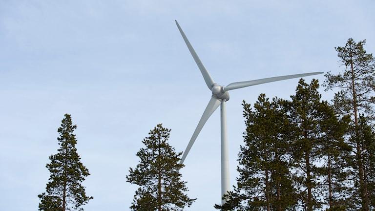 Vindkraftverk i skog. Foto: Fredrik Sandberg/TT