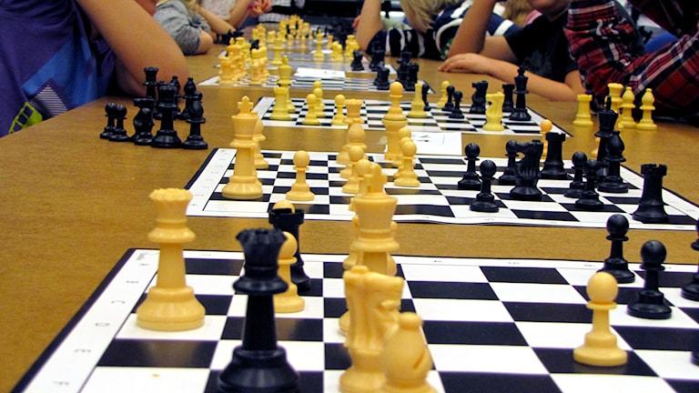 Schackbräden på rad när klasser gör upp i schackfyran i Luleå. Foto: Hjalmar Lindberg/Sveriges Radio.