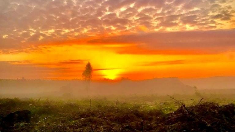 En höstdimmig soluppgång i platt landskap.