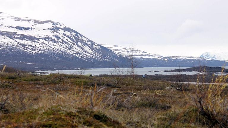 Snön ligger fortfarande djup på många håll i fjällen och det har flera vandringssugna fjällbesökare fått erfara. Foto: Alexander Linder/ Sveriges Radio.
