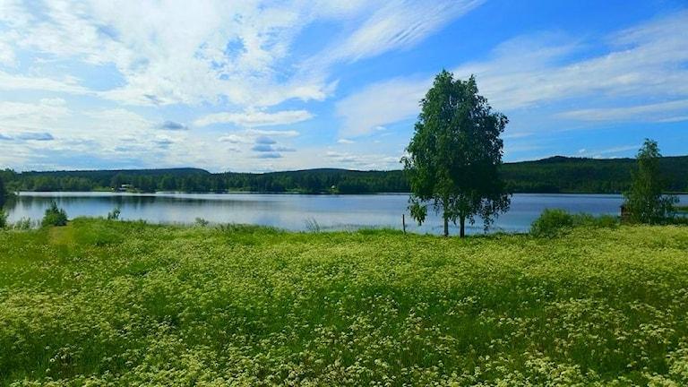 Sommaräng i utkanten av Boden. Foto: Stefan Aho i Haparanda.