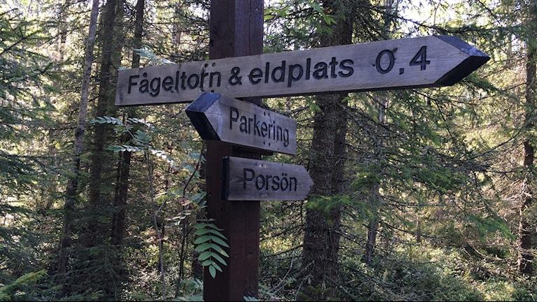 Luleå kommun har bland annat satt upp skyltar och informationstavlor i området. Foto: Samed Salman/Sveriges Radio