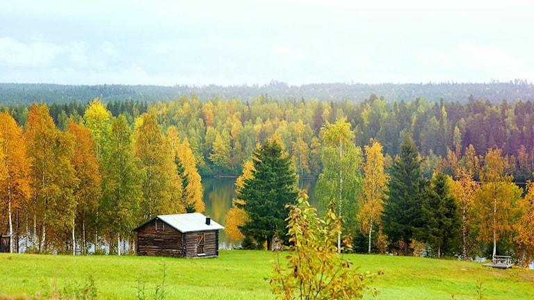 Vy, tagen mellan Boden och Vuollerim. Foto: Emma Hagström