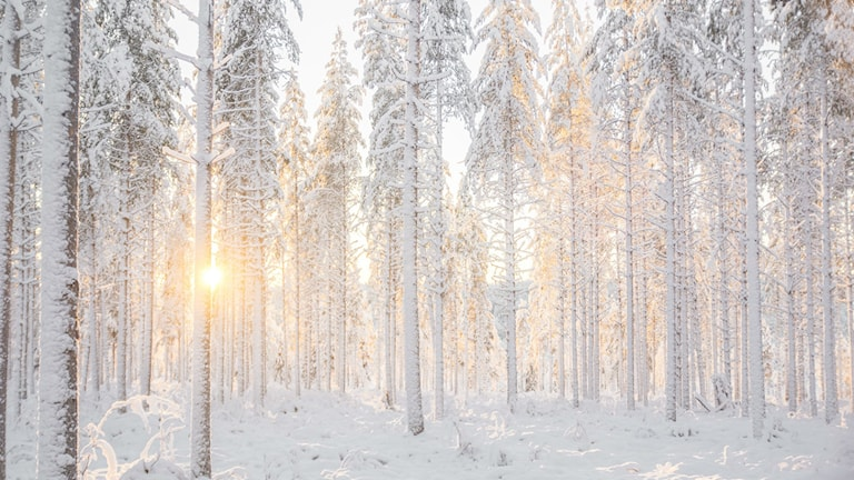 Vintervackra Norrbotten. Foto: Frida Lindgren