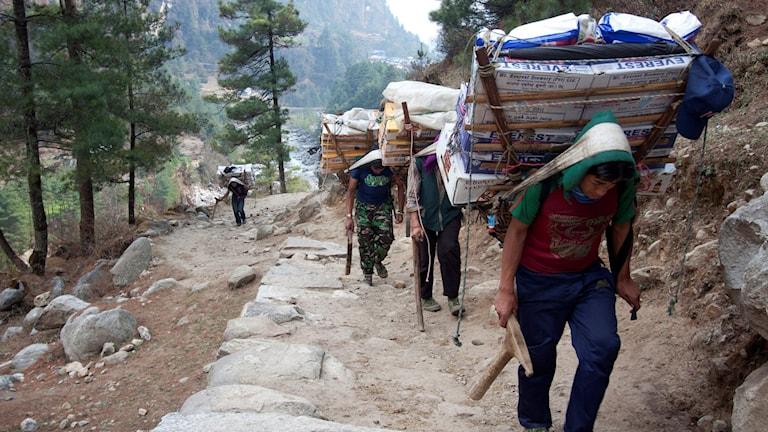 Nepalesiska sherpas
