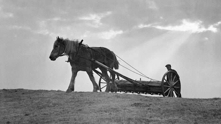Plöjning med häst på 1940-talet.