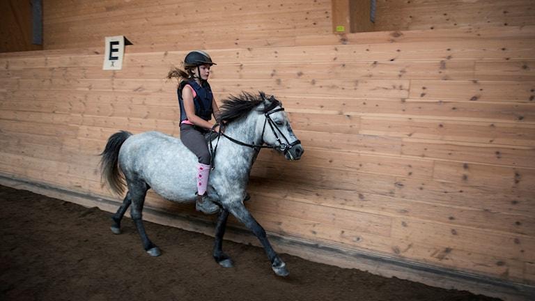 Det sker över 1000 olyckor vid hantering av hästar varje år.