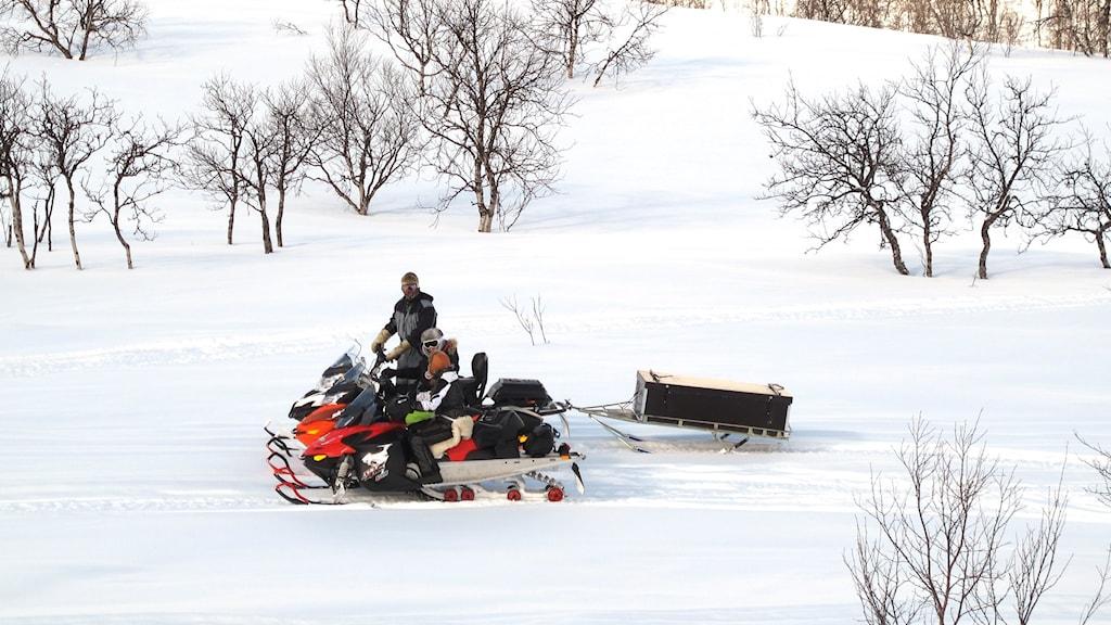 Snöskotrar i Arjeplogsfjällen.