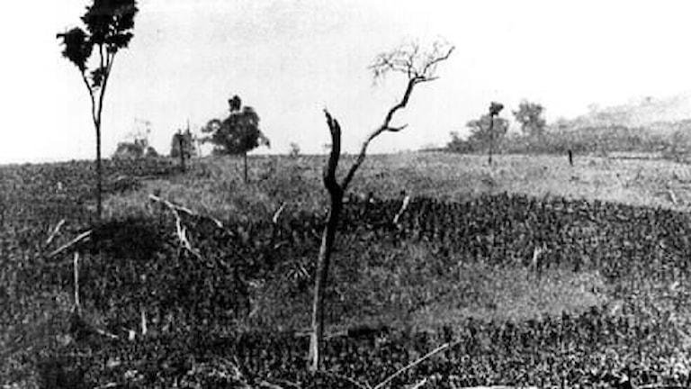 Svedjebruk i Brasilien 1912
