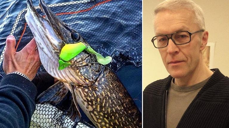 Jättegädda och fiskedraget Headbanger Lures som Dan Lestander designat.
