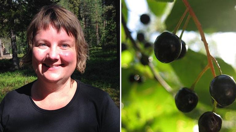 Eva Gunnare häggbär