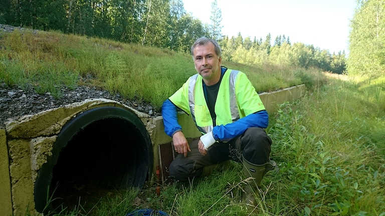 Niklas Kemi, ekolog och viltspecialist vid Trafikverket vid grodtunneln under väg 596 i Bensbyn.