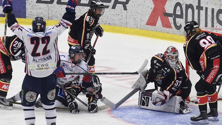 Linköping jublar efter mål mot Luleå Hockey/MSSK.