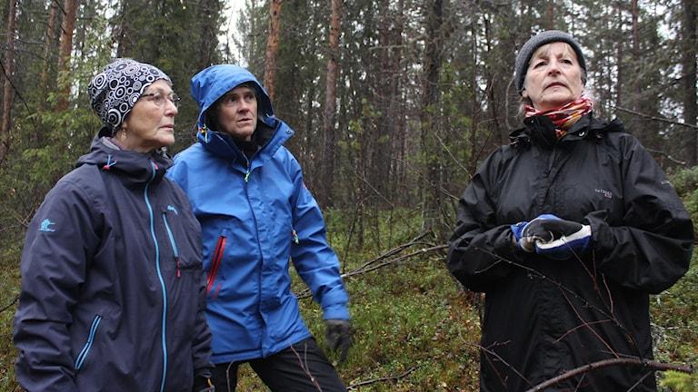 Tre pantertanter i skog utanför Koskullskulle. Anita Feldenius, Maj Aspebo och Vivi Eriksson.