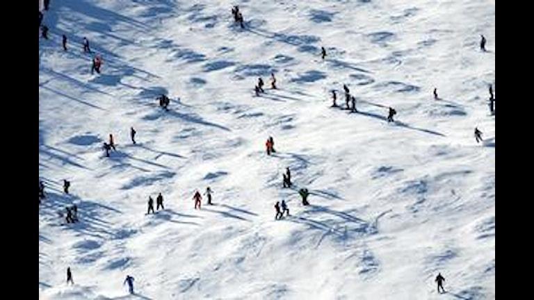 utförsåkning, slalom, vintersemester,