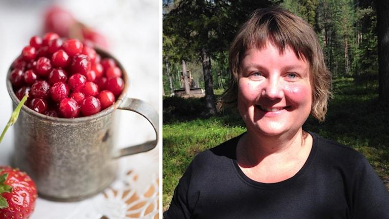 """Matkreatören Eva Gunnare berättar om """"superbäret"""" lingon."""