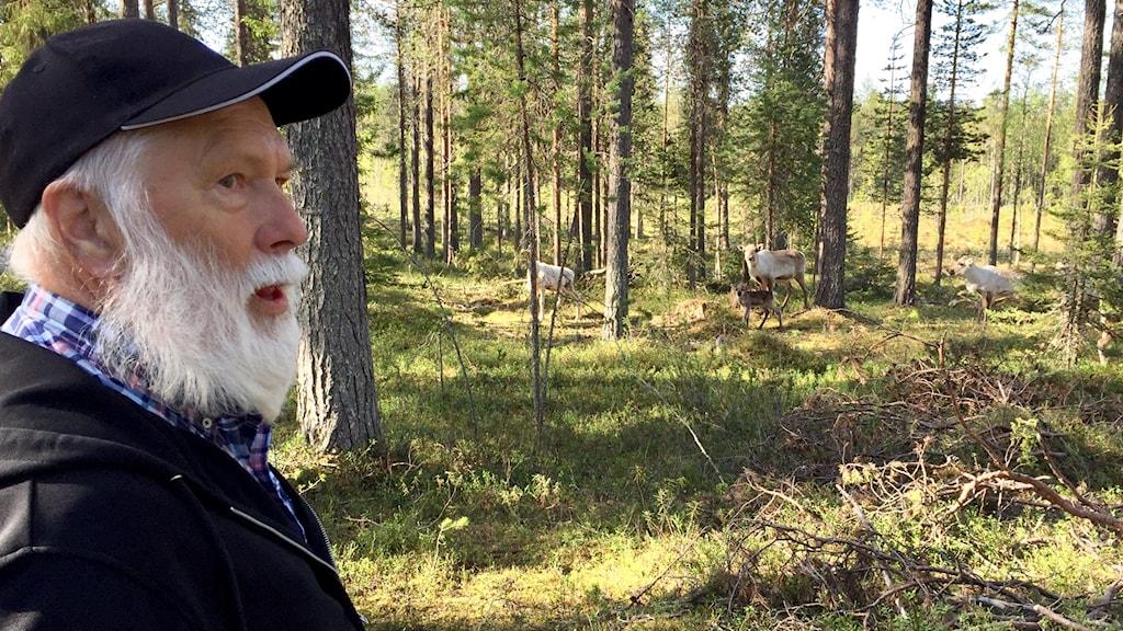 Lars Eriksson i skogen med några renar.