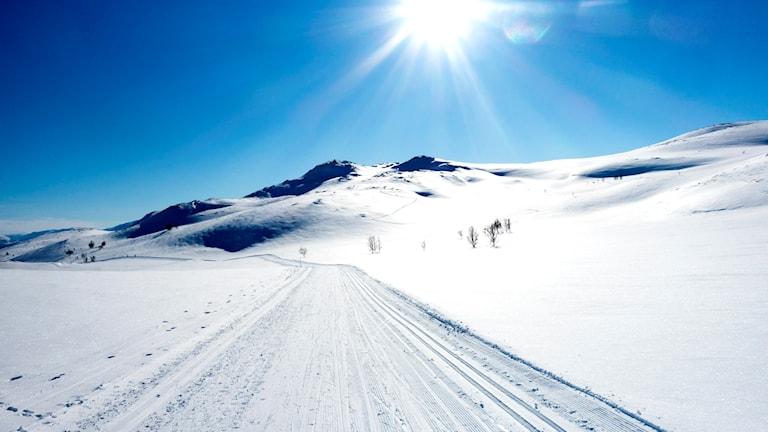 Avstånden gör attt samarbetet mellan norska och svenska naturbevakare utökas.