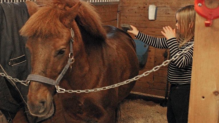 Hästen hålls ren, ryktas, i Kiruna.