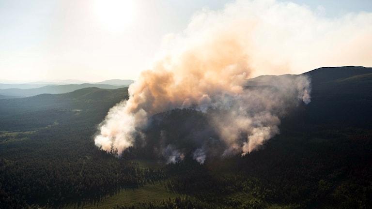 I slutet av juli 2014 brann det i Torneträsk-Soppero naturreservat,