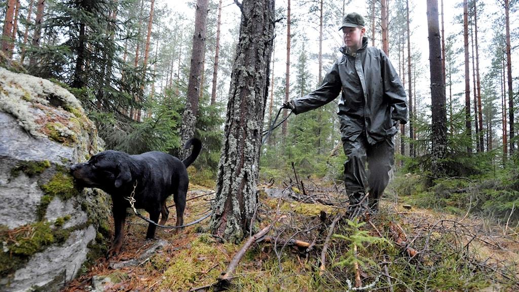 Hemvärnskvinna med hund letar person i skog.