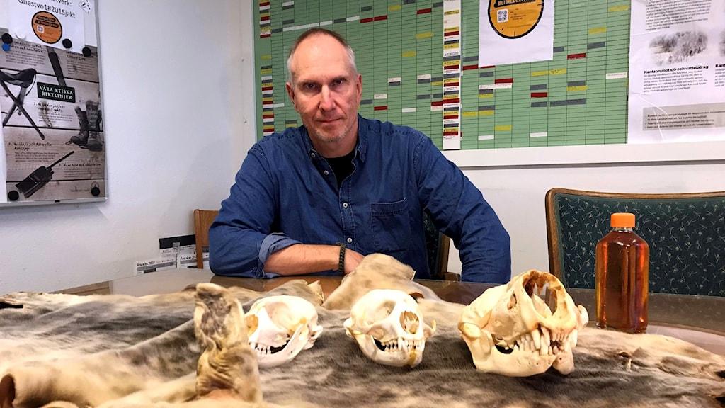 Niklas Lundberg, tre kranier från sälar, ett sälskinn och sälolja.