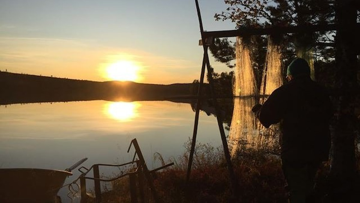 Siluetten av en kvinna som hänger nät i solnedgången som speglar sig i vattenytan.