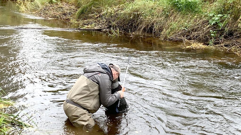 Niklas Wengström letar flodpärlmusslor