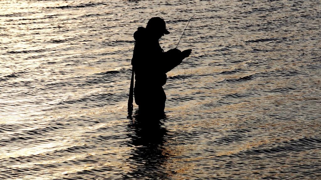Fritidsfiskare med kastspö.