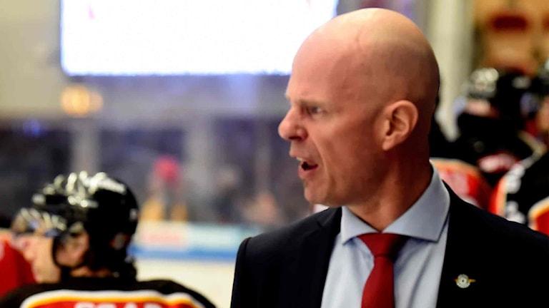 Luleå Hockeys tränare Petter Lasu Nilsson irriterad.