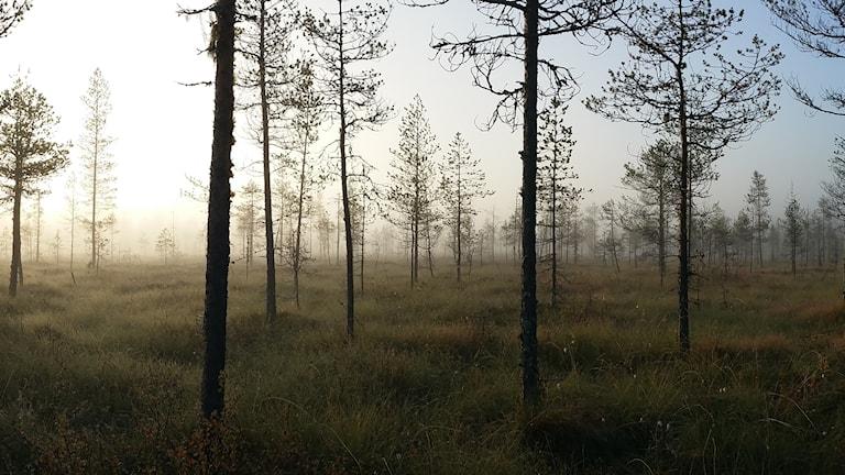 Bilden är en del av ett panorama.